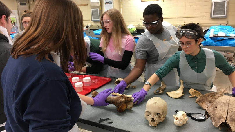 CLST students touch parts of a skeleton laid out on a table